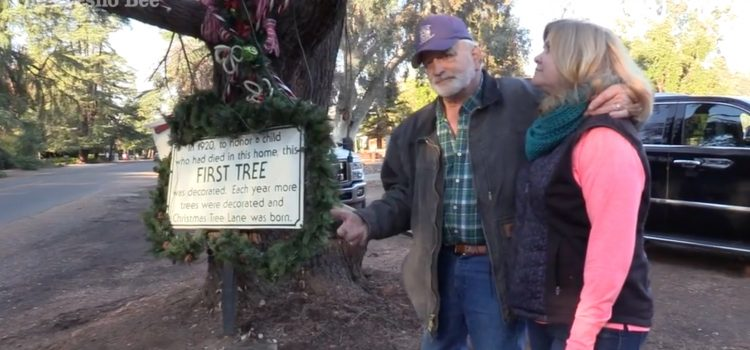 People want to save first tree of Christmas Tree Lane. 'It's part of our history'